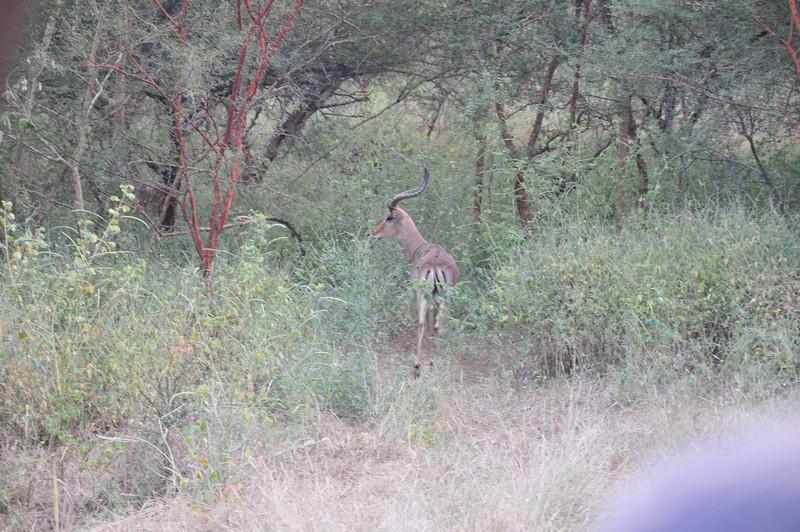 Wildlife in Bandi Animal Reserve near Saly, Senegal