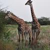 A couple in love - Bandi Animal Reserve near Saly, Senegal