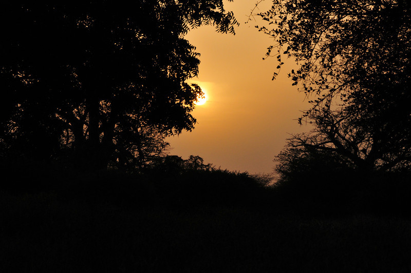 Sunset in Bandi Animal Reserve near Saly, Senegal