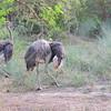 Bandia wildlife