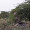 I see you - Bandi Animal Reserve near Saly, Senegal