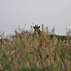 Beautiful in the weeds - Bandi Animal Reserve near Saly, Senegal