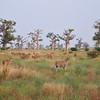 Field of Life - Bandi Animal Reserve near Saly, Senegal
