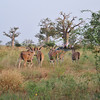 The other safari truck - Bandi Animal Reserve near Saly, Senegal