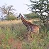 On the move - Bandi Animal Reserve near Saly, Senegal