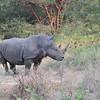 Fantastic Bandia wildlife