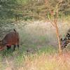 Bandi Animal Reserve near Saly, Senegal