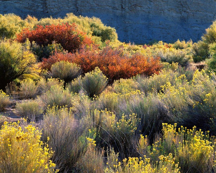 Sagebrush Landscape, Autumn, Utah