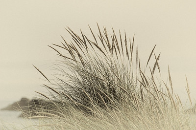 Waving Grasses