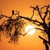 Silhouette tree - Serengeti 2021