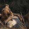 A handful - Serengeti 2021
