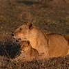 A new day - Serengeti 2021