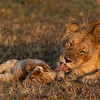 Morning bath - Serengeti 2021