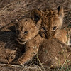 Playtime  - Serengeti 2021