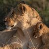 What the day will bring - Serengeti 2021