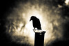 when all is said even crows keep quiet