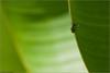 Intrepid Ascent (Leaf Conqueror) ... [7D.2010.9603]