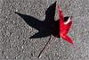 Basking Leaf