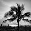 """Sunstar Palm"""