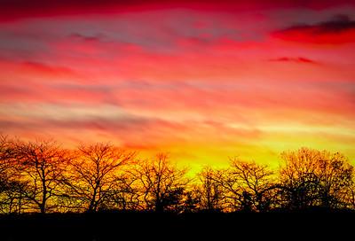 Citrus Sunset
