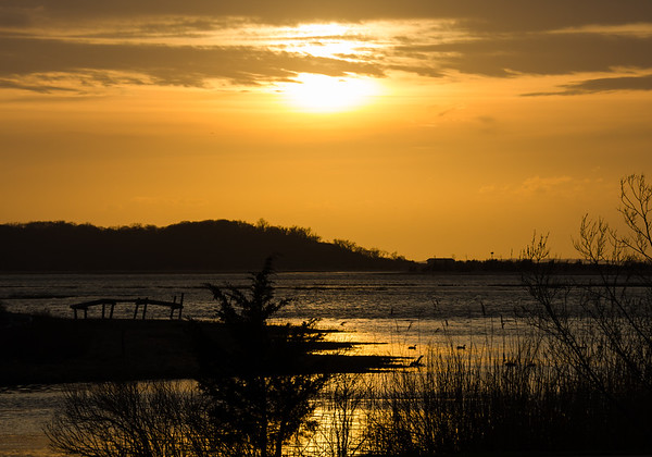 Stony Brook Wetlands
