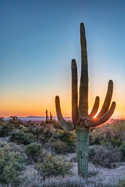 Saguaro Sunstar