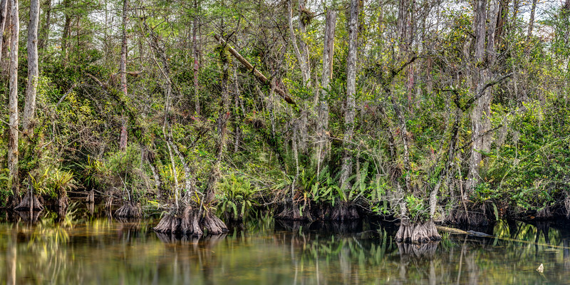 Roadside Swamp