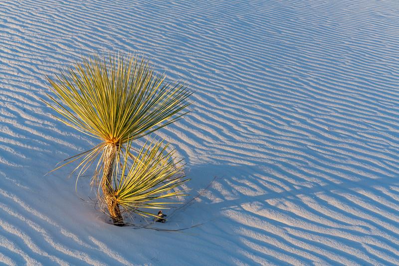 Last Light at White Sands