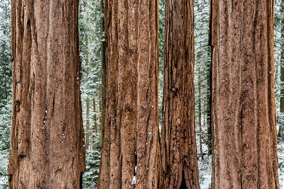 Winter in Kings Canyon National Park