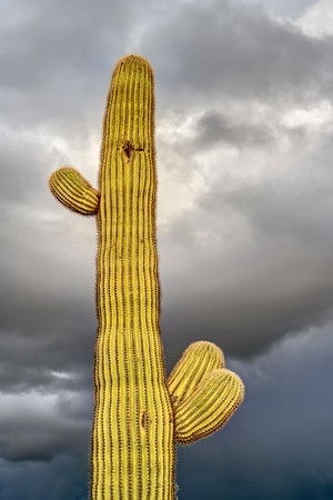 Storm Clouds above Saguaro