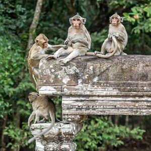 Long-tailed macaques at Angkor Wat