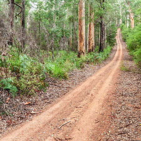 Forest Road in Southwest Australia