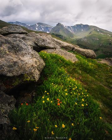 Wildflower galore
