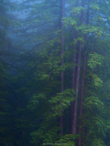 Redwoods National Park, CA