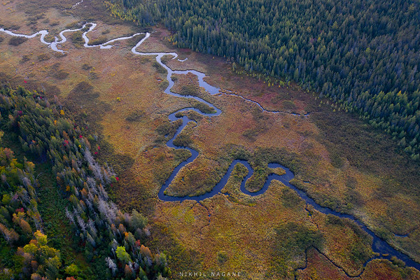 Bogs of Adirondack #1