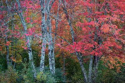 Autumn Galore