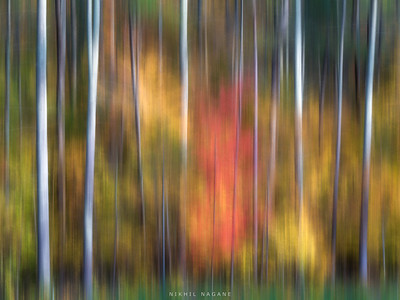 A daydream in autumn