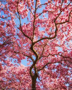 Magnolia state of mind