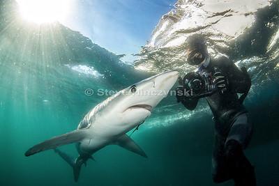 Blue Shark 0196