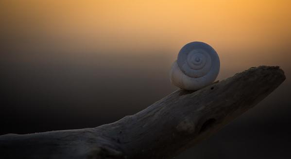 shell, waiting for dusk