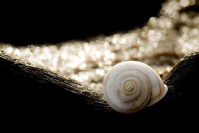 shell, cradled