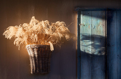 Dried Grasses and Tunisian Shutter, Lucas Valley, 2011