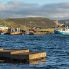 Evening catch coming in at Scalloway harbour.