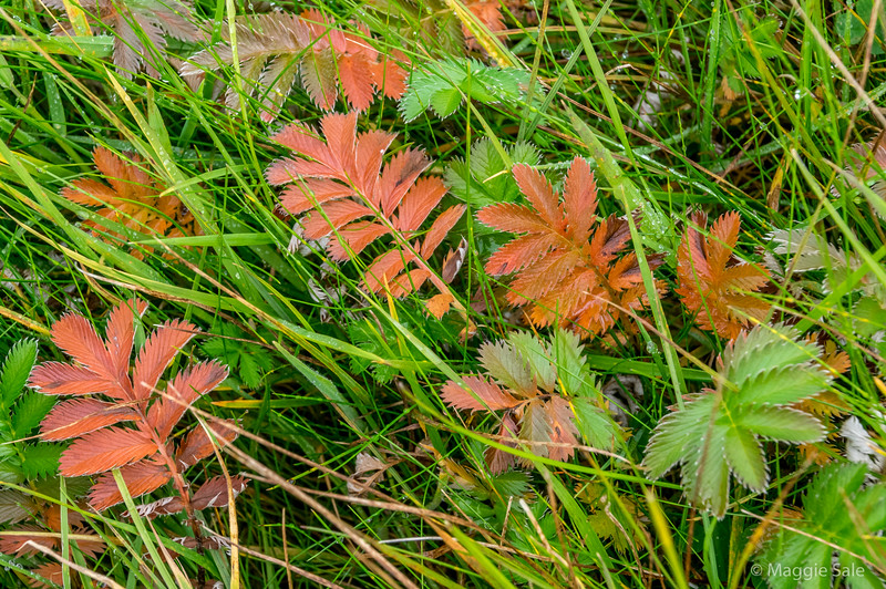 Autumn colour at ground level!