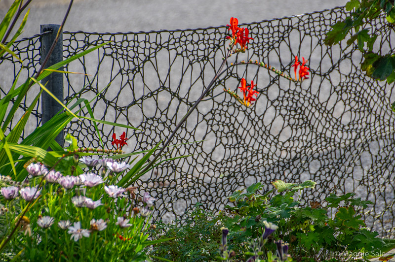 Shetland lace knitting fence (made out of fishing net wire, knitted with adapted curtain poles) made by a lace knitter in Hamnavoe, West Burra