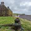"Abandoned fishing bothy and ""Viking"" at Stenness, Northmavine!"