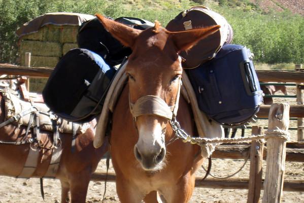 Pack Mule, Start of trail to Dingleberry Lake