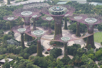 Supertrees grove , view from above