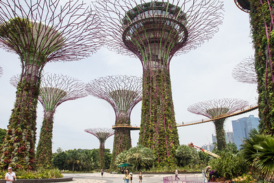 Supertrees Grove