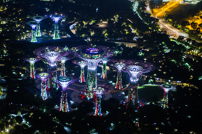 Supertrees Grove at night